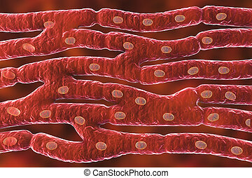 Histological structure of heart muscle, 3D illustration