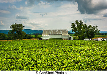Historic barn and farm fields at Antietam National Battlefield, Maryland.