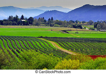 historic lush wine country - Santa Ynez wine...
