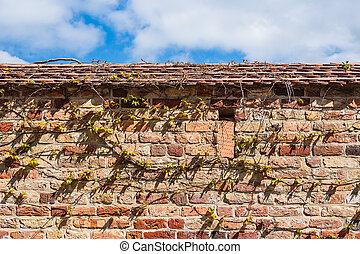 Historical town wall in the city Rostock, Germany.