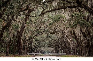 historische plaats, met, lang, tunnel, van, leven, eik