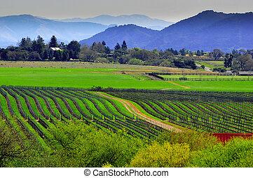 historiske, frodig, vin, land