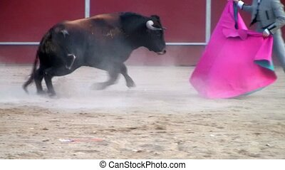 hiszpański, walka byków, potężny, byk