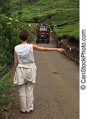 Hitch-hiking - On the tea plantation near Haputale, Sri...