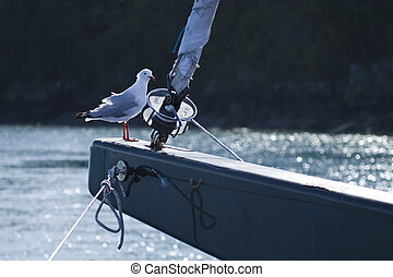 Hitchhiking - A seagall hitchhiking on a sail boat on the ...
