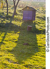 hive in the garden and evening light