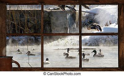 hiver, étang, matin, vue.