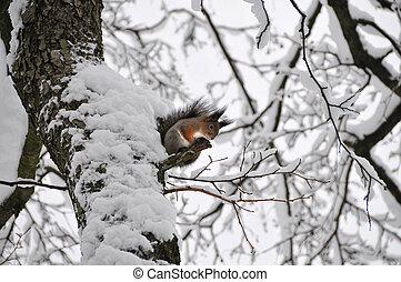 hiver arbre, écureuil