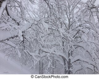 hiver arbre, fond, neige