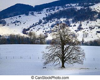 hiver arbre, paysage