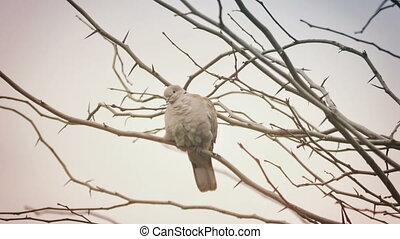 hiver arbre, temps, colombe, 4k