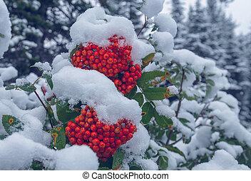 hiver, baie