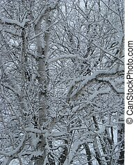 hiver, branches