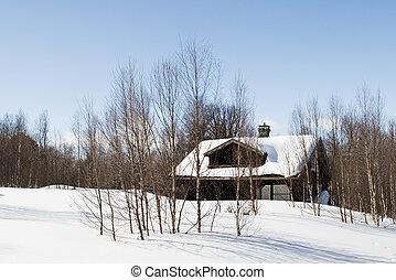 hiver, cabine, forêt