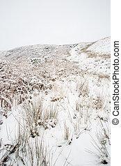hiver, campagne, scène