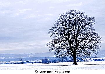 hiver, chêne