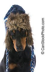 hiver, chien
