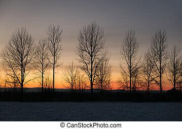 hiver, ciel, arbres, nu, contre, coucher soleil, rang