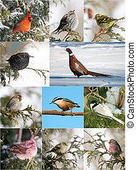 hiver, collection, oiseau