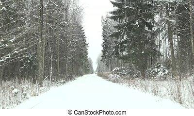hiver, conduite, neige, forest., 4k, manière, couvert