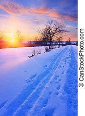 hiver, coucher soleil, dans, a, parc