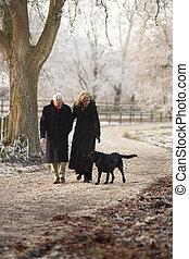 hiver, couple, promenade chien, par, glacial, personne agee, paysage