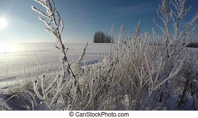 hiver, défaillance, ensoleillé, givré, jour, 4k, temps, paysage