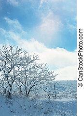 hiver, ensoleillé, arbres, glace, couvert, jour