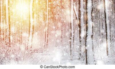 hiver, ensoleillé, neige, arbres, clair, couvert, jour