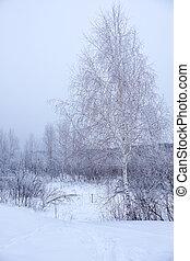 hiver, feuilles, neige, arbres, sans, nu, sous