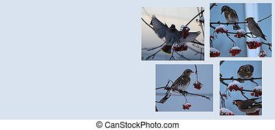hiver, fond, oiseaux