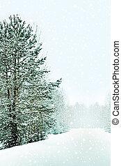 hiver, forêt