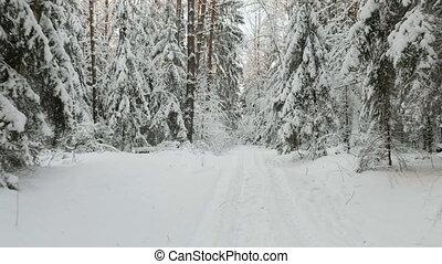 hiver, forêt, neigeux