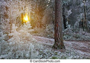 hiver, forêt, paysage