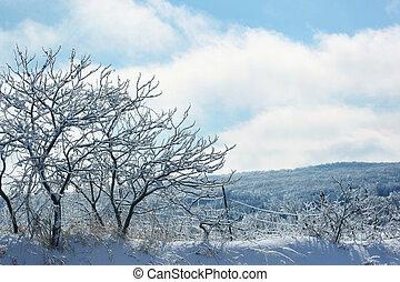 hiver, gelée, arbres, glace, couvert, jour
