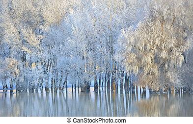 hiver, glacial, arbres