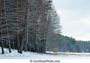 hiver, jour