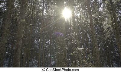 hiver, matin, forest., impeccable, promenade, montagnes.
