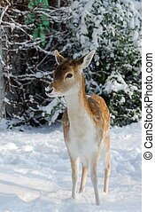 hiver, mignon, cerf