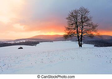 hiver,  nature, soleil, arbre, neige, paysage