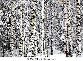 hiver, neige, arbres, forêt, bouleau, couvert