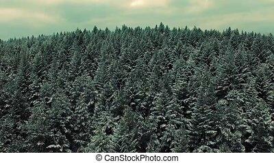 hiver, neige, par, forêt, suivre, aerial:, pas