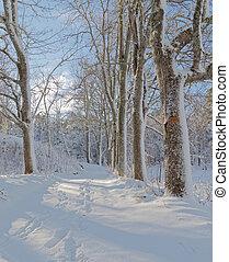hiver, neigeux, ensoleillé, ruelle, arbres, jour