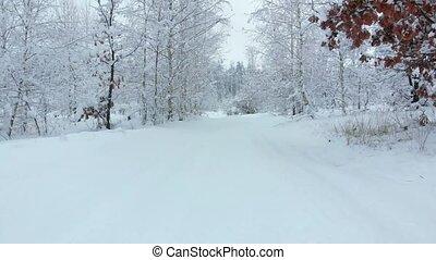 hiver, neigeux, forwards., en mouvement, route, forêt