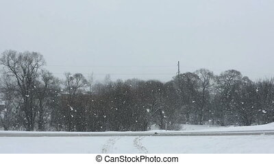 hiver, parc, neige, arbres, couvert, tomber