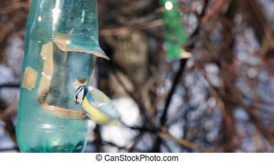hiver, pendre, nourrisseur, oiseau, branche, mésanges, ...