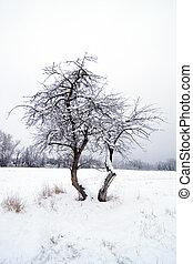 hiver, pomme sauvage, arbre.