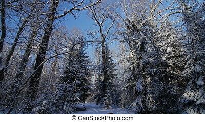 hiver, pov, parc, neige, arbres, mouvement, sentier, couvert, jour