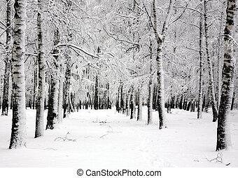 hiver, printemps, arbres, avril, bouleau, jour