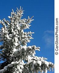 hiver, sapin, sous, neige